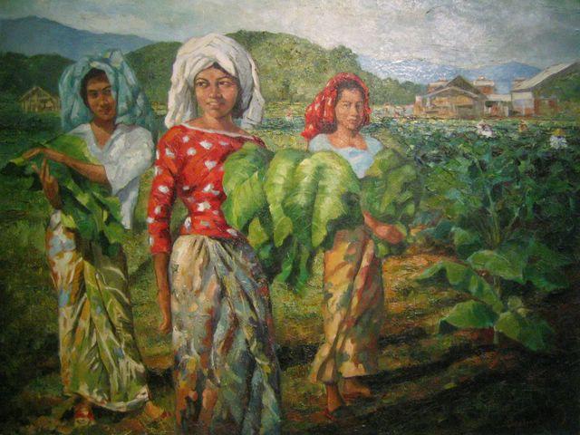 Memetik daun Tembakau di Kelantan